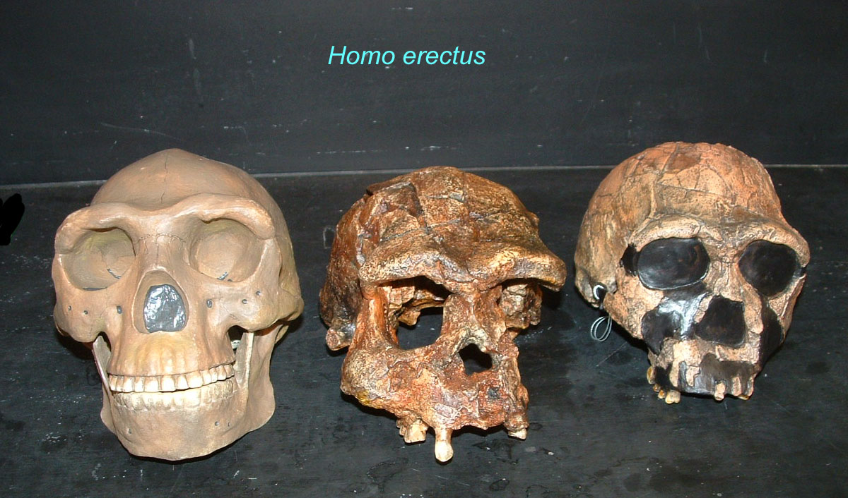 dating hominids