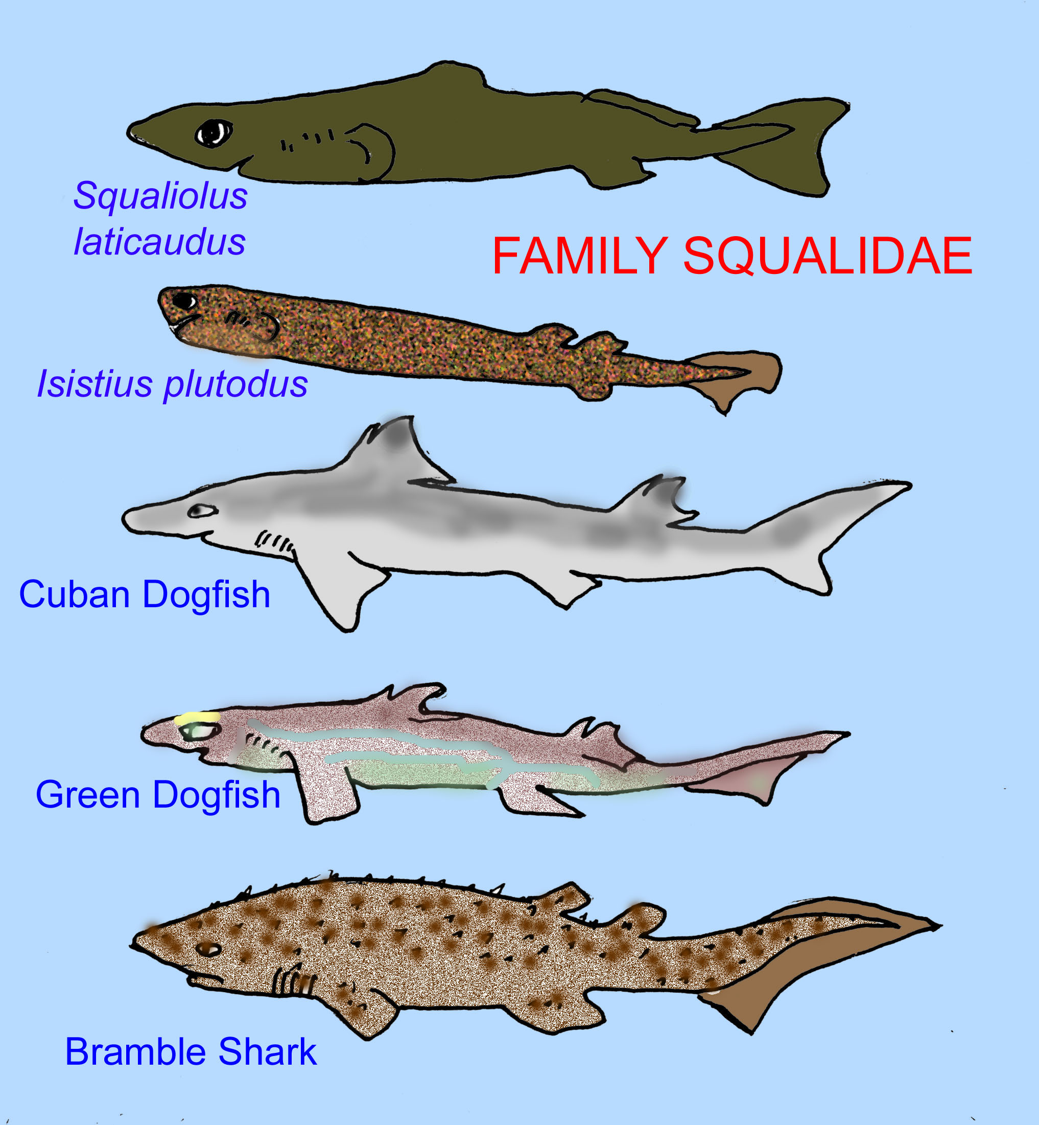A list of types of sharks