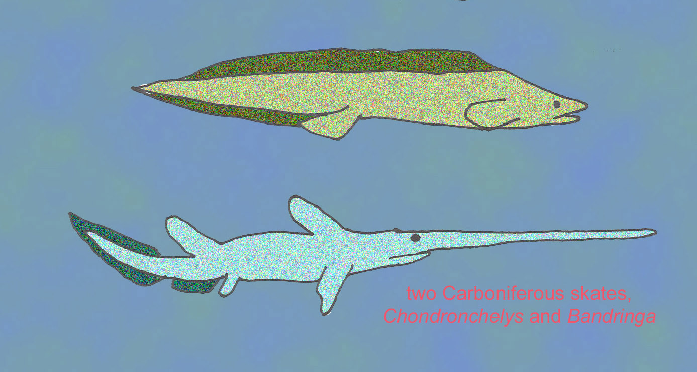 Untitled document for Cartilaginous fish examples