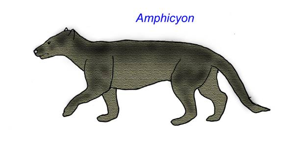 Common Ancestor To Dogs And Cats